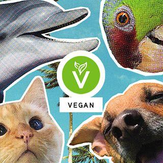 Shop Vegan Tile